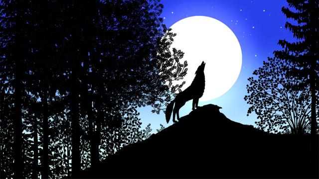 les-contes-de-la-nuit-8.jpg