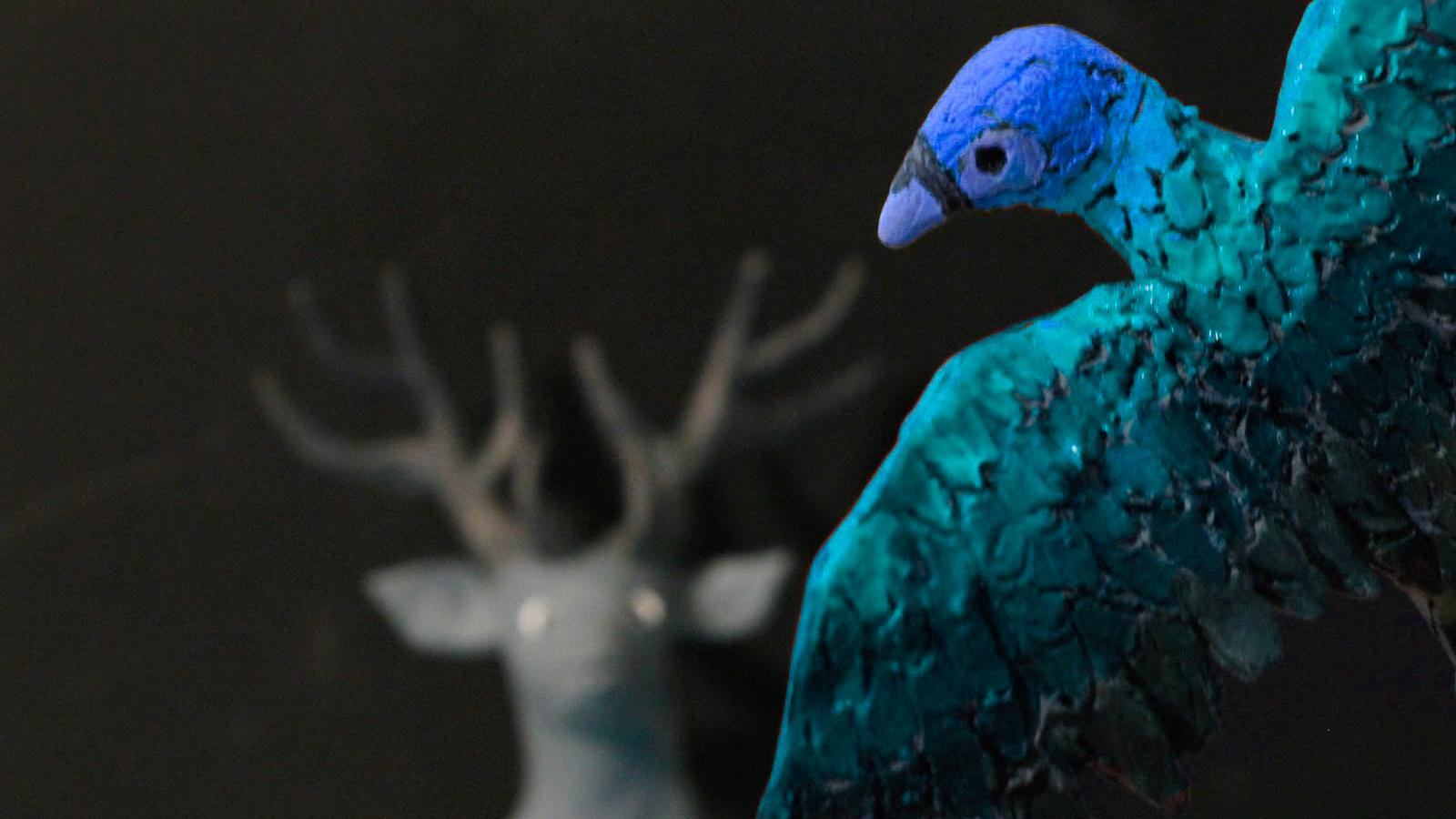 oiseaux-souci-3.jpg