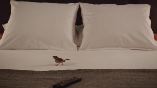 bird-people-12.jpg
