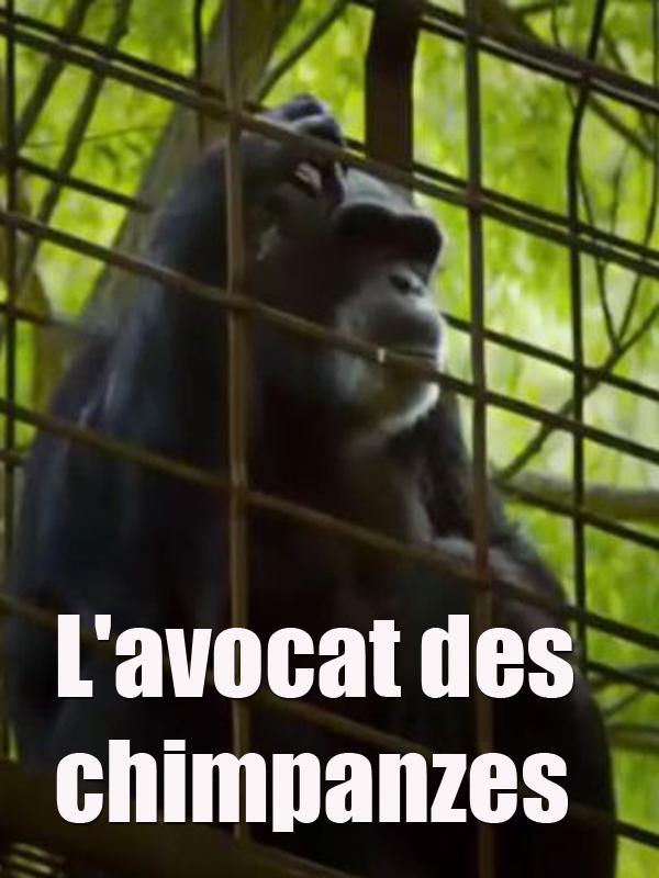 L'avocat des chimpanzés   Hegedus Et D. A. Pennebaker, Chris (Réalisateur)