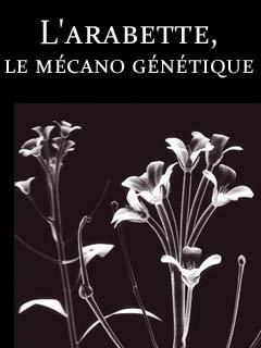 Secrets de plantes : l'arabette, le mécano génétique |