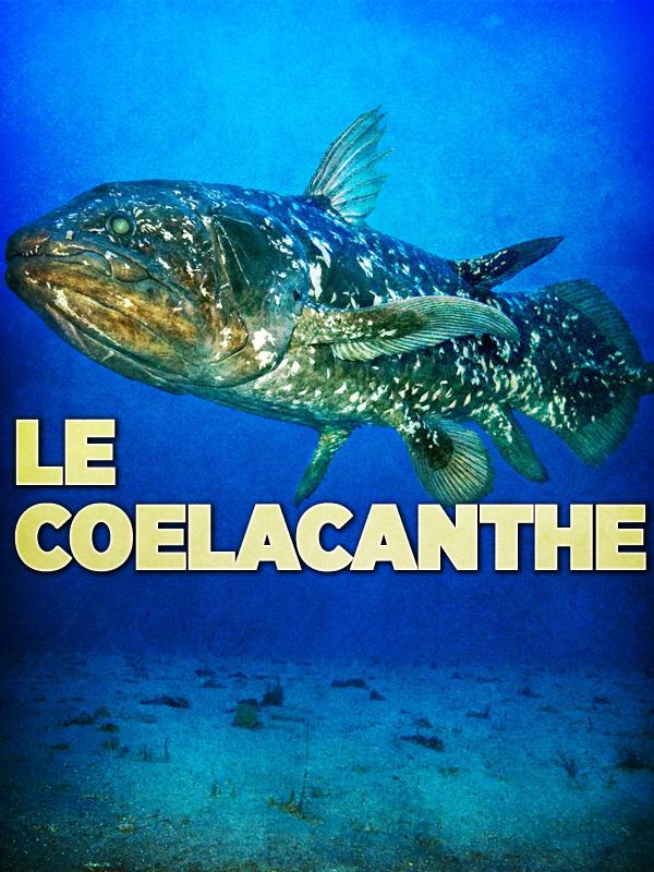 Le Coelacanthe | Kebaili, Gil (Réalisateur)