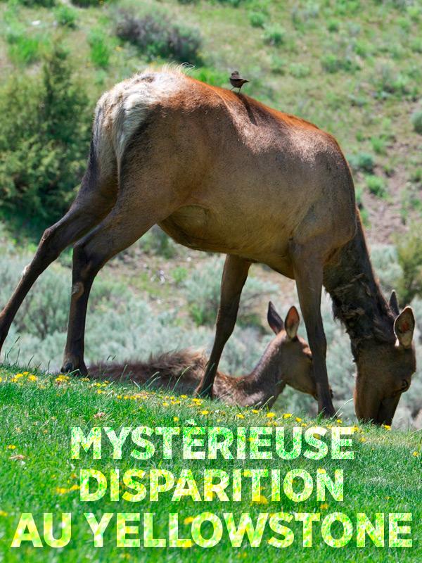 Mystérieuse disparition au Yellowstone | Corrine, Manfred (Réalisateur)