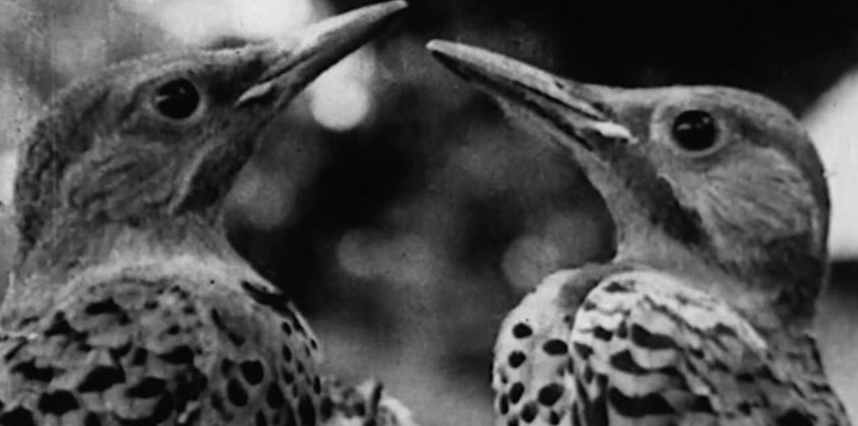the bird 1.jpg