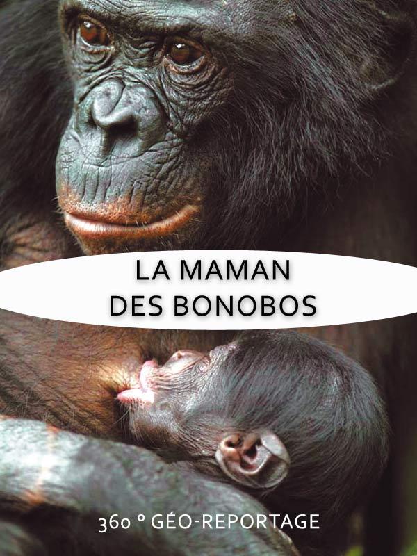 360° Geo-Reportage - La maman des bonobos | Hennequin, Dominique (Réalisateur)