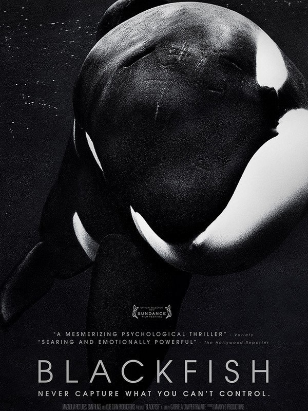 Film Fest Gent Blackfish