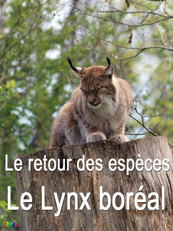 Le retour des espèces - Le lynx boréal | Charbonnier, Laurent (Réalisateur)