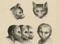Image de La Beauté animale