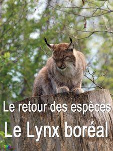 Le retour des espèces - Le lynx boréal