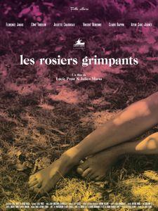 Les Rosiers grimpants