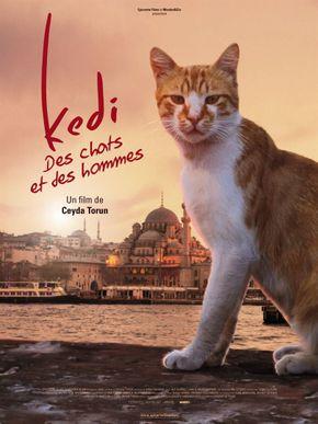 Kedi, des chats et des hommes