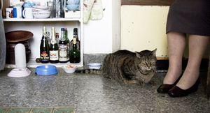 Les Vieux Chats