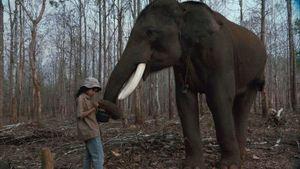 Lucky l'éléphant