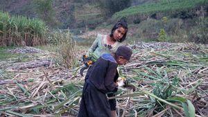 Ta'ang, un peuple en exil, entre Chine et Birmanie