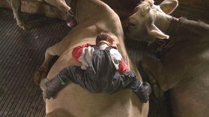 Kühe, Käse und 3 Kinder