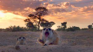 Le Clan des suricates, l'aventure commence