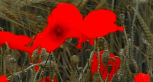 Fleurs de sang