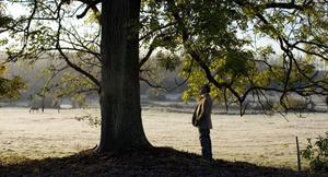 L'Arbre et la forêt