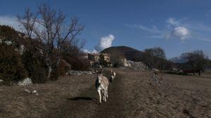 Les Chèvres de ma mère