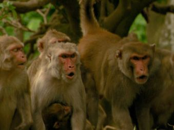 Movie pictures Primates des Caraïbes